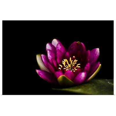 Poster Print Wall Art entitled Closeup capture of pink water lily on pond.