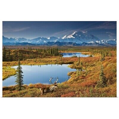 """Bull Caribou And Tundra Pond With Mt. McKinley, Denali National Park, Alaska"