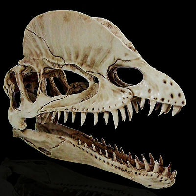 New Dilophosaurus RESIN DINOSAUR SKULL Cast Taxidermy MODEL COLLECTIBLE antique
