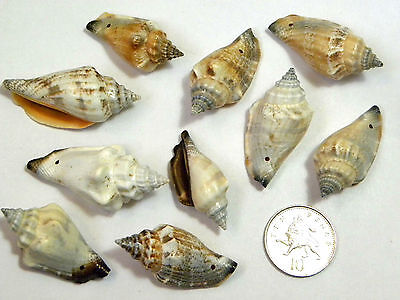 10 Large Patterned Spiral Shell Pendant Beads with Drilled Hole
