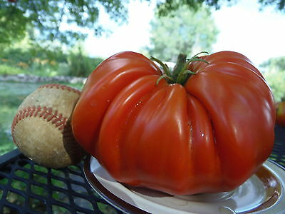 Pum Rim - very rare tomato, huge and deeply fluted