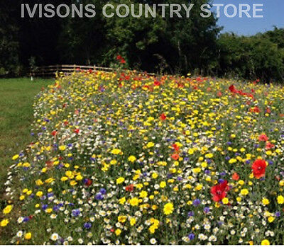 IVISONS 100% CORNFIELD ANNUALS WILDFLOWER SEEDS 25g NO GRASS WILD FLOWER MIX 2