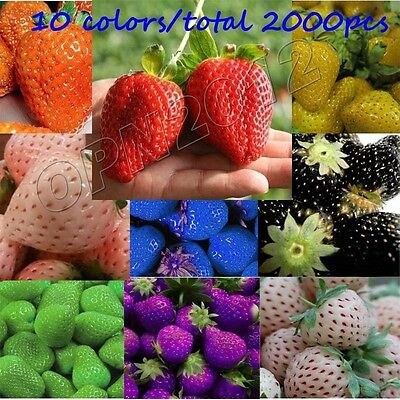 2000pcs Strawberry Seeds Berry Planting Nutritious Delicious Fruit Garden Yard