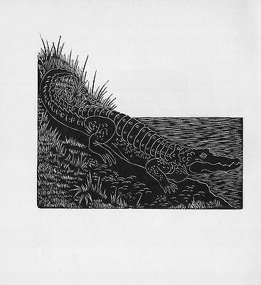1928 AWESOME Black & White woodcut / etching: CROCODILE Herpetology Reptile