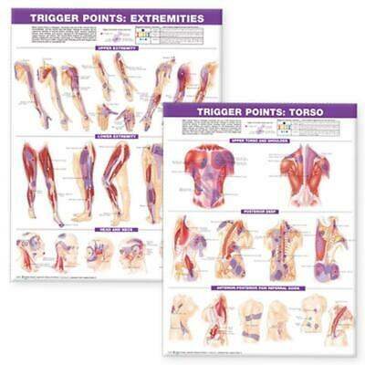 Trigger Point Chart Set: Torso and Extremities by Acc (English)
