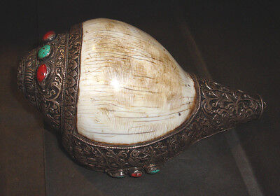 """Genuine Old Tibetan Buddhist Ritual Ceremonial Conch Shell Trumpet Just Over 7"""""""