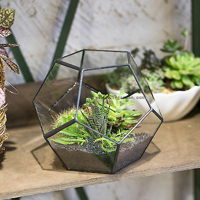 Pentagon Ball Glass Geometric Terrarium Box Tabletop Succulent Plant Planter