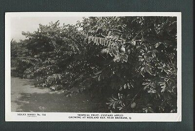 Vintage Postcard - Siudes Series No723 Tropical Fruit - Free Postage