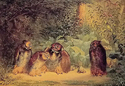 Oil painting william holbrook Beard - beautiful birds owls family in forest 36""