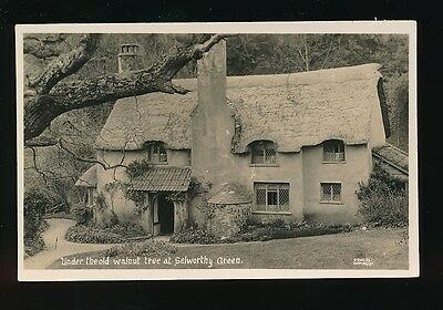 Somerset SELWORTHY GREEN Walnut Tree & cottage c1920/40s? RP PPC