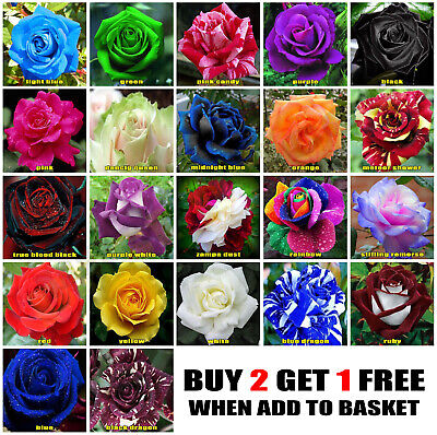 25x Rose Seeds Multi Coloured Rose Flower Seeds Home Garden Plant, UK Rose Seeds