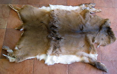 New Whitetail Deer Skin Rug Craft Throw Hide Hair Fur Taxidermy Collectible 3