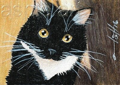 ACEO print limited edition tuxedo cat  by Anna Hoff