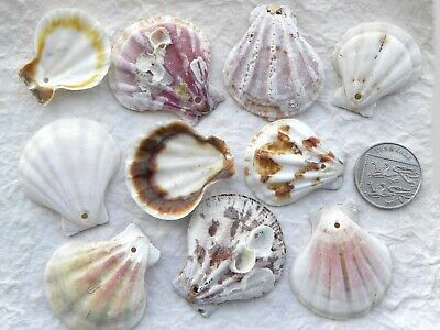 10 Scallop Shell Pendant Beads with Drilled Hole Seashell Random Assorted Mix