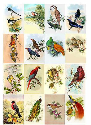 "Decoupage Paper [10 sheets A4 / 8""x12""] Birds FLONZ 801-002 Craft Scrapbooking"