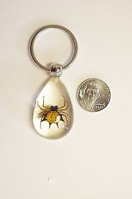Real Spiny Spider key chain in the clear acrylic, real insect, real bug