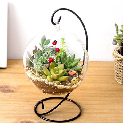Stand Clear Ball Flower Hanging Vase Planter Terrarium Container Glass Bottle AU