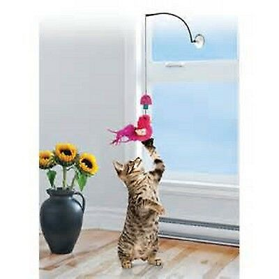 Kong Cat, Window Teasers, Pack of 3, Premium Service, Fast Dispatch