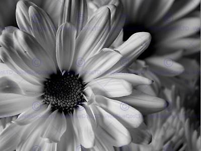 ORGANGE FLOWER BLACK WHITE BACKGROUND CONTRAST PHOTO ART PRINT POSTER BMP2192A