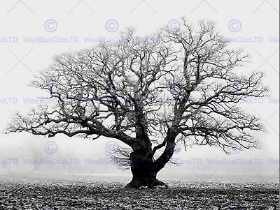 THETFORD FOREST TREES MIST PHOTO ART PRINT POSTER PICTURE BMP2401A