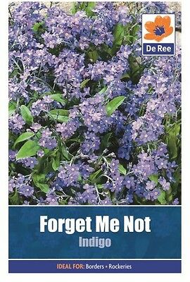 2 Packs of Forget Me Not Indigo Flower Seeds, Approx 410 seeds per pack