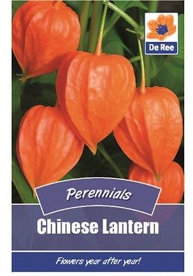2 Packs of Chinese Lantern Perennial Seeds, Approx 115 seeds per pack