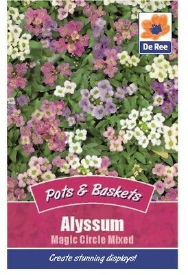 2 Packs of Alyssum Magic Circle Mixed Flower Seeds, Approx 400 seeds per pack