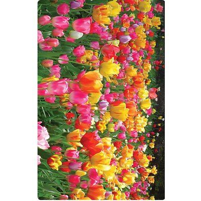 NEW Personalised Luggage Tag - Tulips from Gogo Gear Travel Accesssories