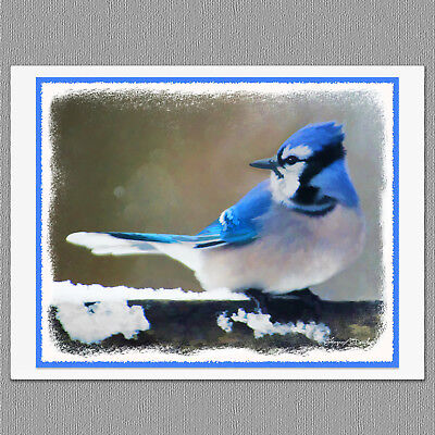 6 Blue Jay Wild Bird Blank Art Note Greeting Cards