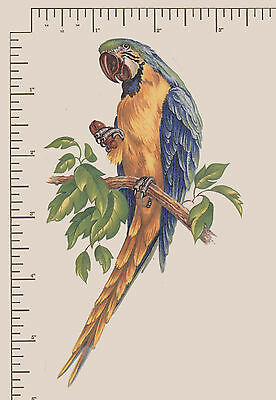 "1 x Waterslide ceramic decal Decoupage Tropical bird Approx. 3 3/4"" x 4 1/2"""
