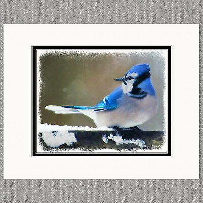 Blue Jay Wild Bird Original Art Print 8x10 Matted to 11x14