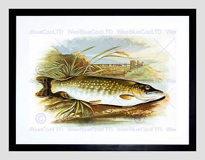 Painting Animal Fish Northern Pike Lydon Black Framed Art Print B12X12827