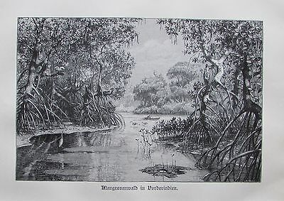1898 MANGROVENWALD INDIEN alter Druck antique Print Lithographie Mangroven