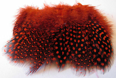 Guinea Fowl Feathers - Orange - Fly Tying Material