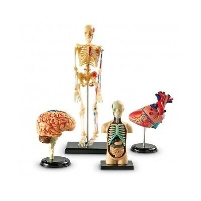 Human Body Anatomy Model Heart Brain Skeleton Organs 4d Science Lab