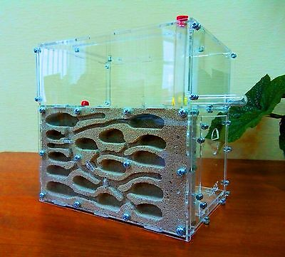 Ameisenfarm ACFK-1. New educational Ant farm - Formicarium for LIVE ants.