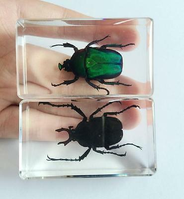 2 Vintage Stag Beetle Insect Specimens In Lucite Paperweight Crafts