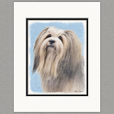 Havanese Dog SIlver Original Art Print 8x10 Matted to 11x14