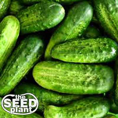 National Pickling Cucumber Seeds - 25 SEEDS NON-GMO