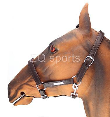 FAST P&P Beautiful Padded Leather Headcollar Cob Brown