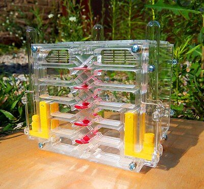 Ant farm AFK-8.1. New educational formicarium - ant nest for LIVE ants.