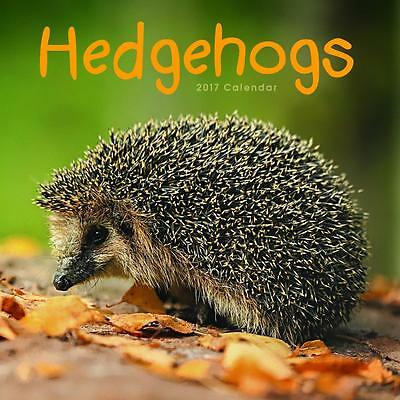 Hedgehogs 2017 Square Wall Calendar New And Factory Sealed