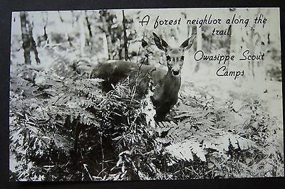Forest Neighbor BSA OWASIPPE Scout Camps, MI postcard RPPC postmarked circa 1954