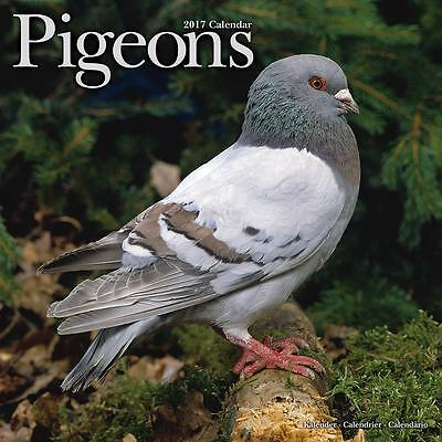 Pigeons 2017 Uk Square Wall Calendar New And Sealed By Avonside