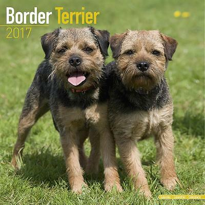 Border Terrier Dog 2017 Uk Square Wall Calendar New And Sealed By Avonside