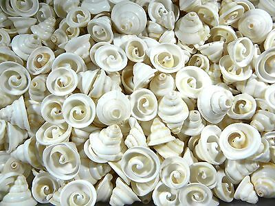 20 Cream White Cone Spiral Shells Beads with Hole Jewellery MORE IN MY SHOP