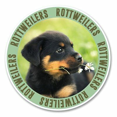 ROTTWEILER STICKER 12cm x 8cm Dog Free Aus Post Magnet Available