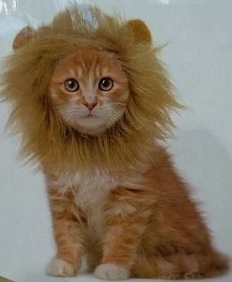 Lions Mane For Small Dogs Or Cats Dcl 29