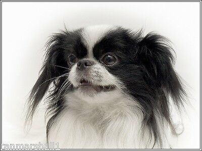 4Pack Japanese Chin Puppy Dog Dogs Stationery Greeting Notecards /  Envelopes