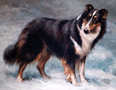 Scotch Collie Standing Dog Puppy Dogs Puppies Vintage Poster Print